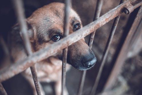 Znęcanie się nad zwierzętami to ważny społeczny problem, uznany w USA za przestępstwo federalne.